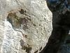 Rochers en forêt de Larchant_P.Fraile