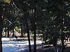 Sables en forêt de Larchant_P.Fraile