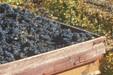 Harvest time in Pays d'Aigues, Vaucluse_PNR Luberon
