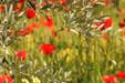 Olive grove_P.Aguilar - SMAEMV