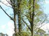 La Réserve de biosphère est un lieu de promenade très fréquenté des franciliens_RB Fontainebleau et Gâtinais