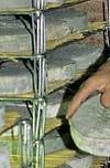 Production du fromage St-Nectaire dans le Cantal_A. Bordes - EPIDOR