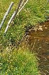 Ruisseau de montagne dans le Puy de Dôme_A. Bordes - EPIDOR